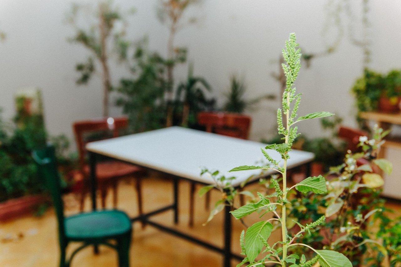Κήπος Σεμινάρια – Πρόγραμμα Απρίλιου 2018: Δράσεις με διάθεση ανανέωσης!