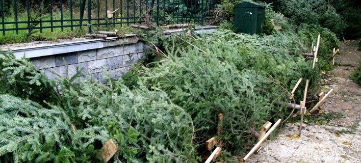 Ανακύκλωση στα Χριστουγεννιάτικα δέντρα!