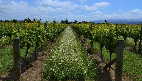 Wine Plus: «Κρασιά Βιολογικής + Βιοδυναμικής καλλιέργειας»