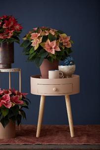 Φθινοπωρινές ιδέες διακόσμησης με αλεξανδρινά!